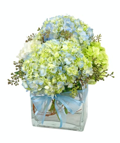 Beautiful hydrangeas in blue, white and green in a clear glass vase.