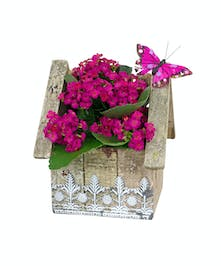 Pretty little kalanchoe plant in a wooden birdhouse, ideal for any location.