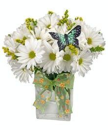 White daisies in a clear glass cube vase with butterfly decoration on top and tied with a green ribbon.