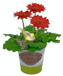 Send this thoughtful gift, a small planter to adorn their desk.