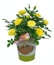 Send this thoughtful gift, a small planter to adorn their desk or table.
