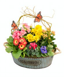 Rustic garden contains a varity of blooming plants in vibrant colors.
