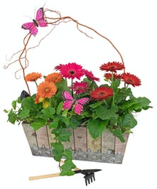 Charming, rustic planter with gerbera daisies, ivy and mini garden tools.