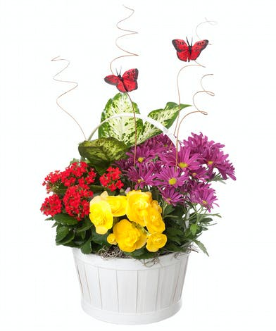White handled basket filled with blooming plants in purples, reds and yellows.