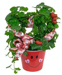 For the plant lover, try this romantic heart shaped ivy plant.