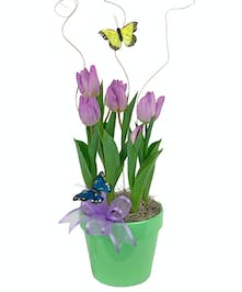 Tulips planted in a ceramic pot with a bow and butterfly.