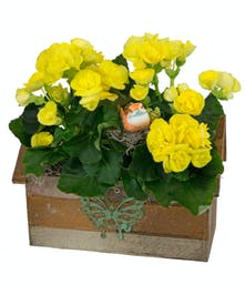 Charming, birdhouse planter with colorful begonias.