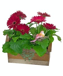 A charming birdhouse planter contains two gerber daisy plants.