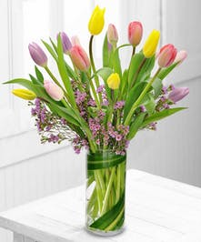 Tulips and waxflower arranged in a clar glass cylinder vase.