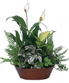 Peace lily plant with white flowers and green foliage in a floor planter.