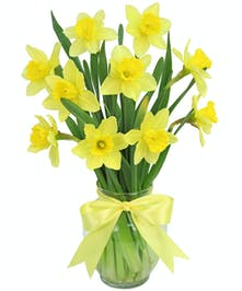 Sunny yellow daffodils will make their day!