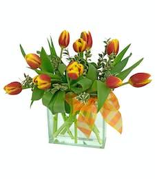 Daybreak Tulips