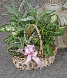 Loving Sentiments - Basket Planter