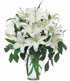 Serenity - All White Lilies