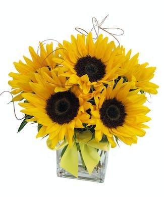 Sunflower Cube